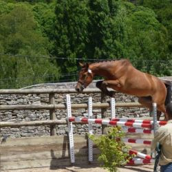 Centre équestre Breizh équitation Locoal Mendon près de Belz