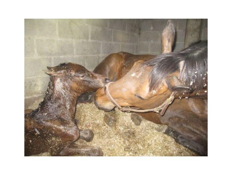 Centre équestre Breizh équitation Locoal Mendon