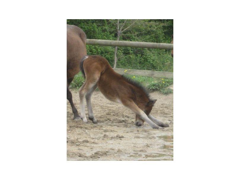 Poney club Breizh équitation à Locoal Mendon près de Auray