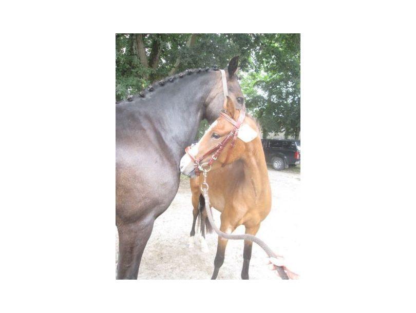 Centre équestre et poney club Breizh équitation Locoal Mendon